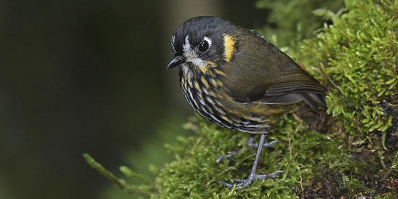 Andes Birding Tour