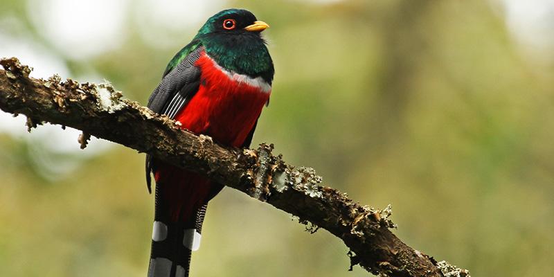 Observar Aves en el Quindío?>