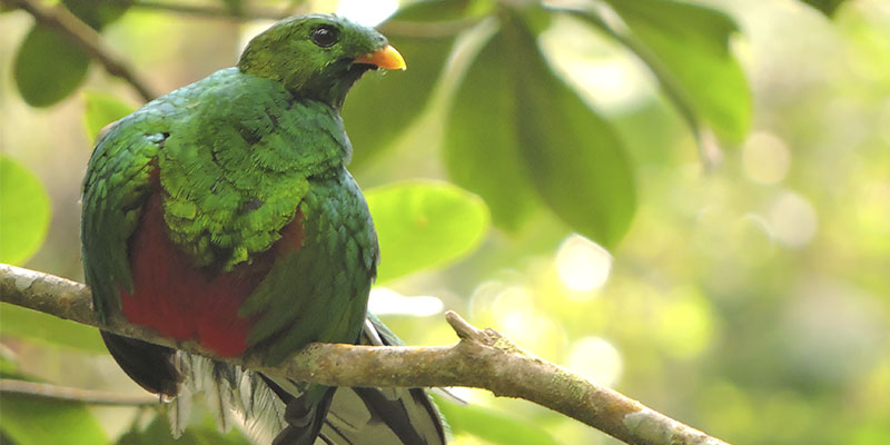 Santa Marta Parakeet Birding Tour