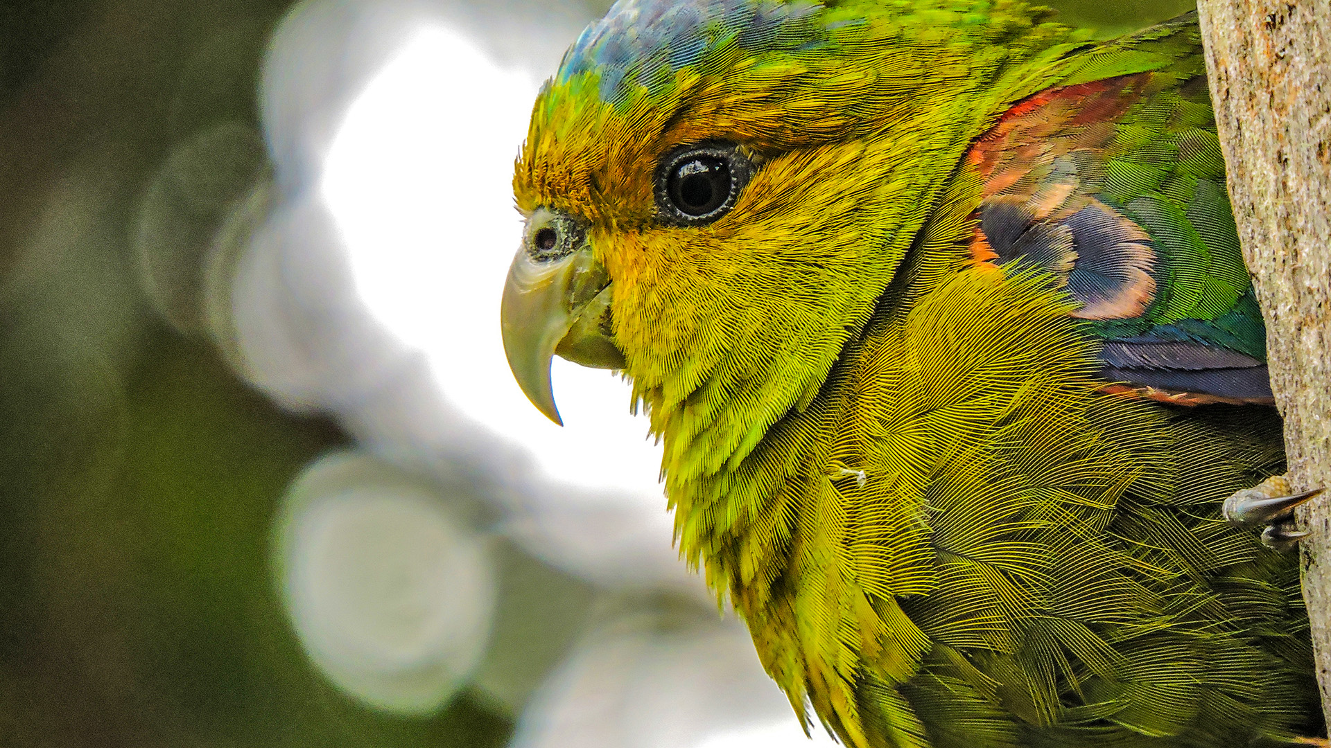 Birding and Harping