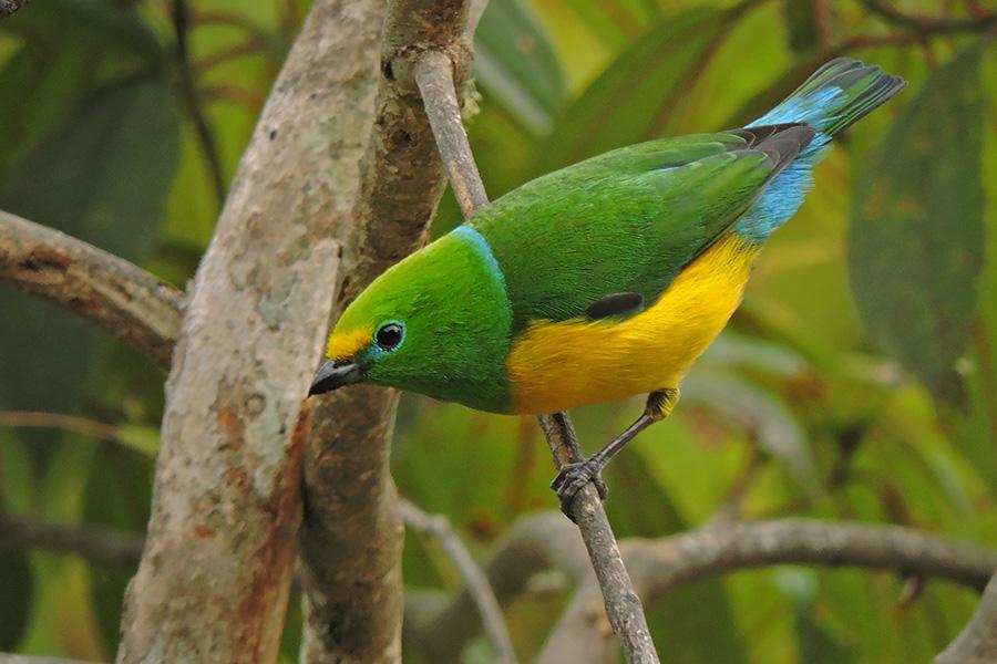 Birding and Herping