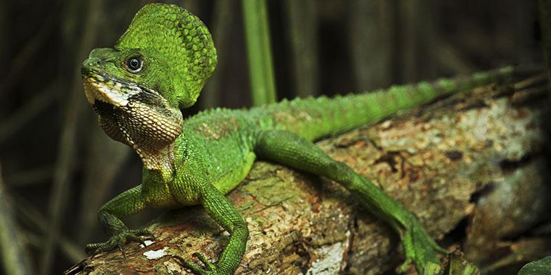 Tour Reptiles del Magdalena