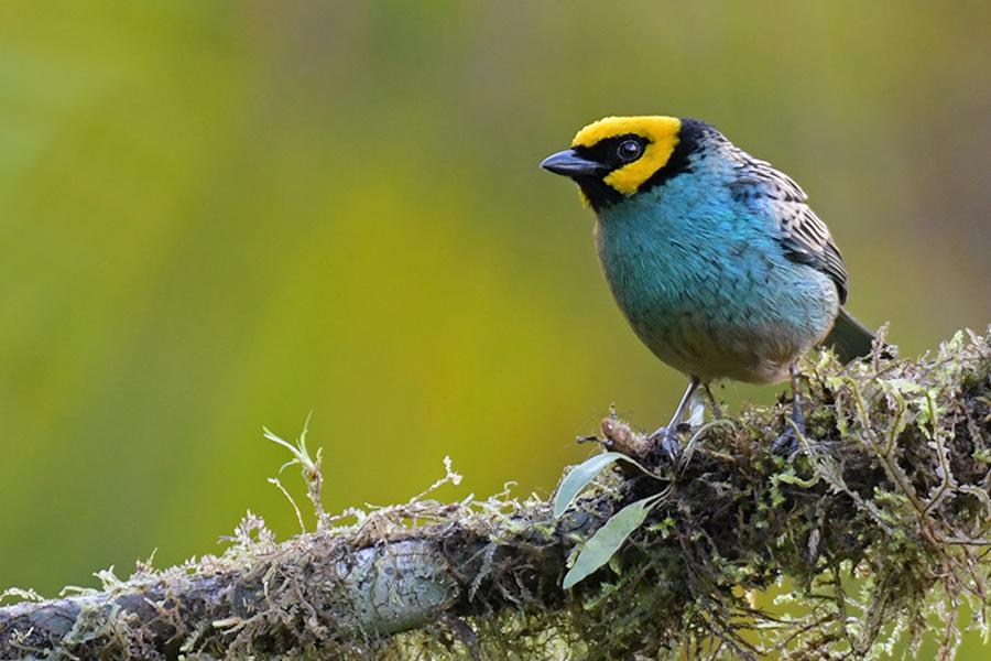 Community- Birding and Herping