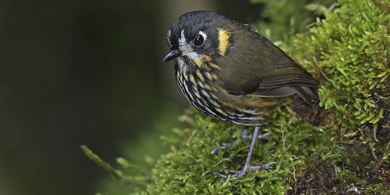 Andes Birding Tour?>