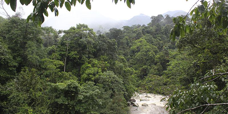 Llanos Orientales & Amazonian Piedmont