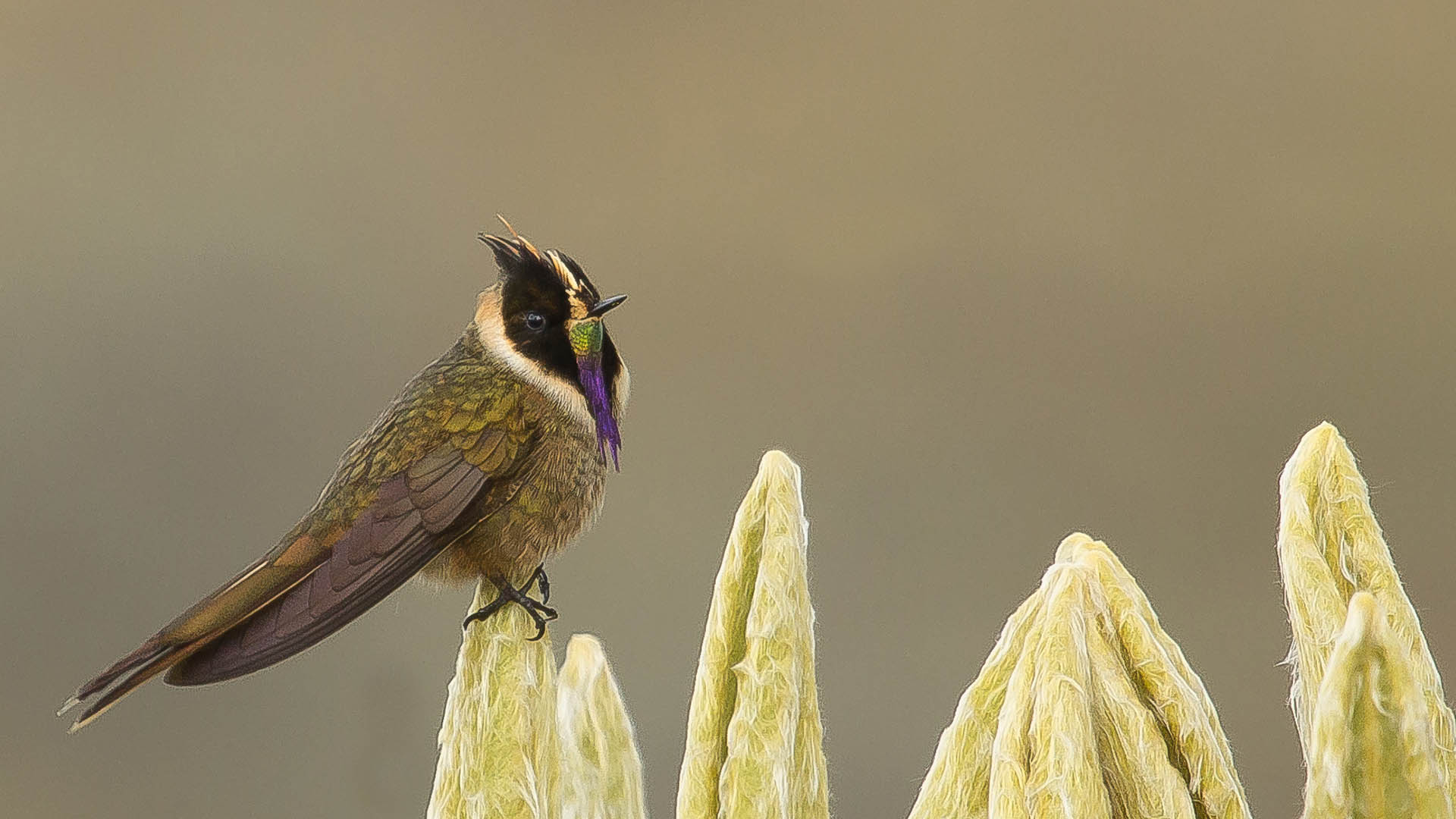 BirdingTours